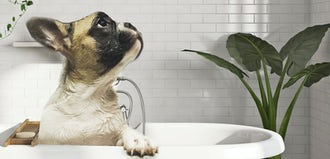 Introducing our purrfect baths for your pets