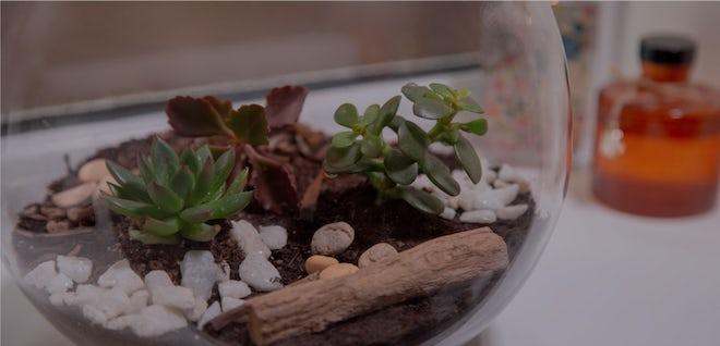 How to make a terrarium for your bathroom