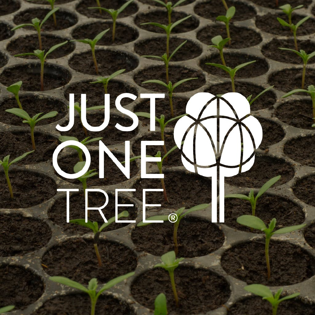 Planting for the future