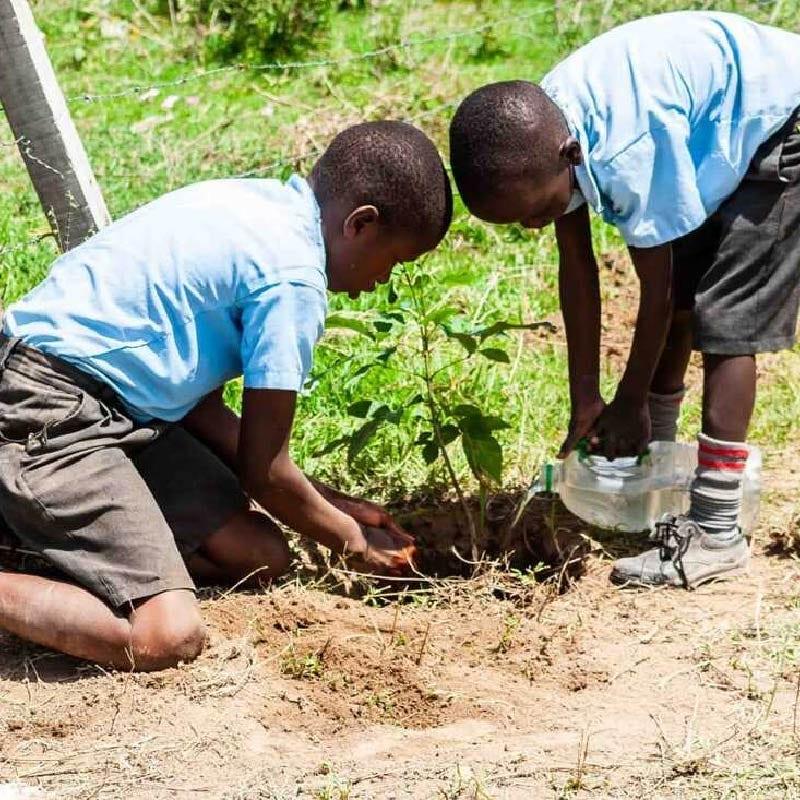 Schoolchildren in Kenya caring for new trees
