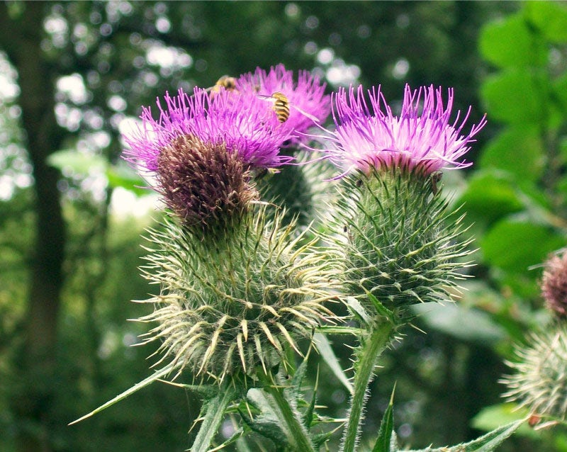 Create a thistle bouquet
