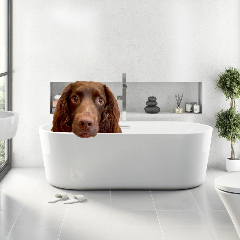 Another dog in a bath